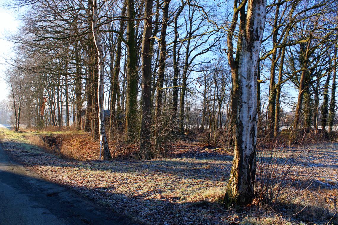 Winterwaldrand in Norddeutschland
